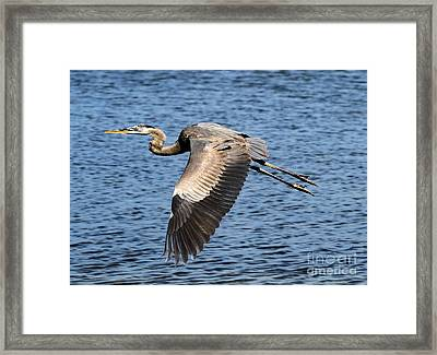 Wings Framed Print by Adam Jewell