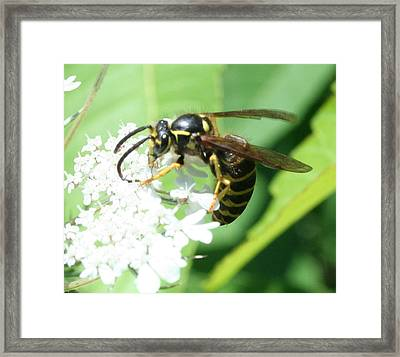 Wings And White Flowers Framed Print by Stephen Melcher
