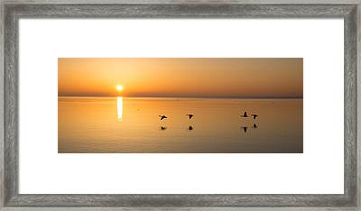 Framed Print featuring the photograph Wings At Sunrise by Georgia Mizuleva