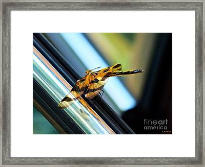 Wings Framed Print by Christy Ricafrente