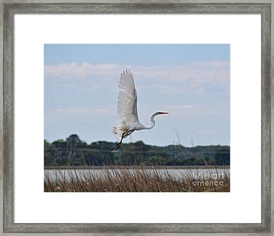 Framed Print featuring the photograph Wings by Carol  Bradley