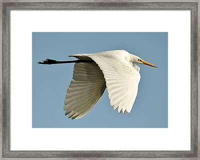 Wings Down Framed Print by Paulette Thomas