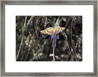 Wings From Heaven Framed Print by Meir Ezrachi