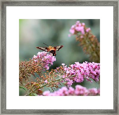 Wings In The Flowers Framed Print