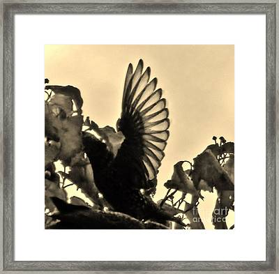 Wings Framed Print by Judy Via-Wolff