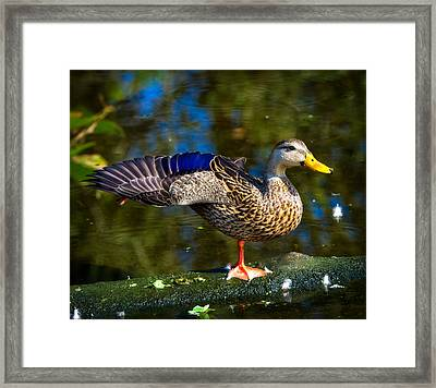 Wings Framed Print by Mark Andrew Thomas