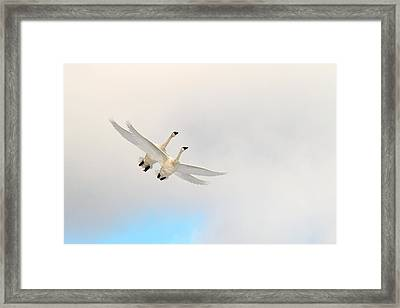 Wings Of Angels Framed Print by TL  Mair
