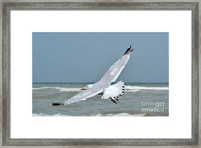 Framed Print featuring the photograph Wings Of Freedom by Simona Ghidini