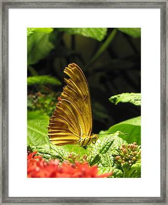 Wings Of Gold Framed Print by Jennifer Wheatley Wolf
