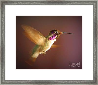 Wings Of Gold Framed Print