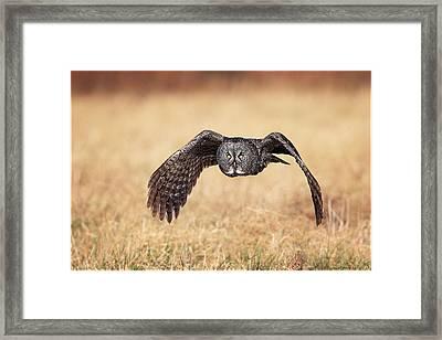Wings Of Motion Framed Print by Daniel Behm