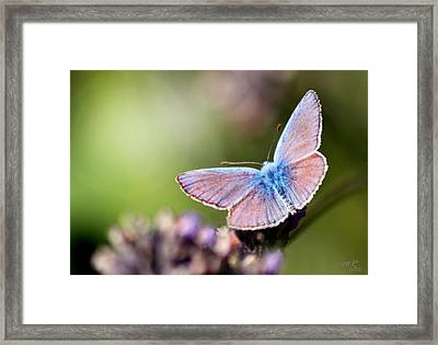Wings Of Tenderness Framed Print by Martina  Rathgens