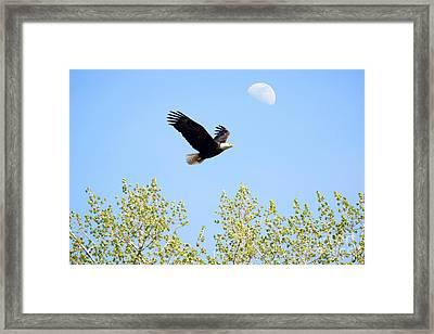 Wings Of The Moon Framed Print by Lori Tordsen
