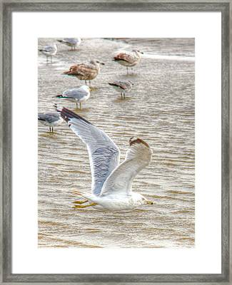 Wings On Fire Framed Print