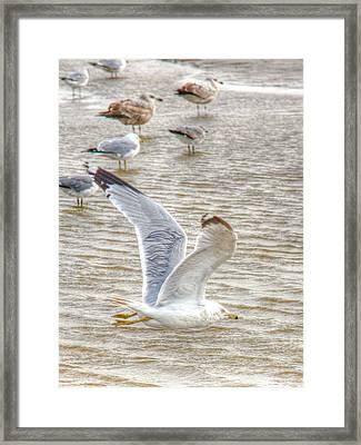 Wings On Fire Framed Print