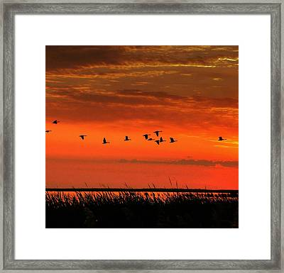 Wings On High Framed Print