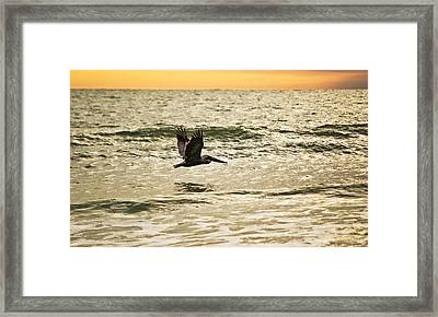 Wings Over Water Wil 270 Framed Print