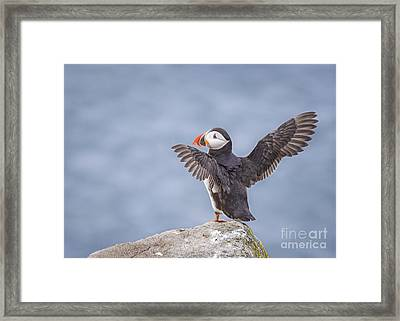 Wings To Fly  Framed Print by Evelina Kremsdorf