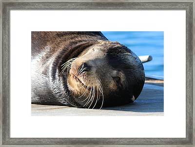 Framed Print featuring the photograph Wink Wink by Christy Pooschke