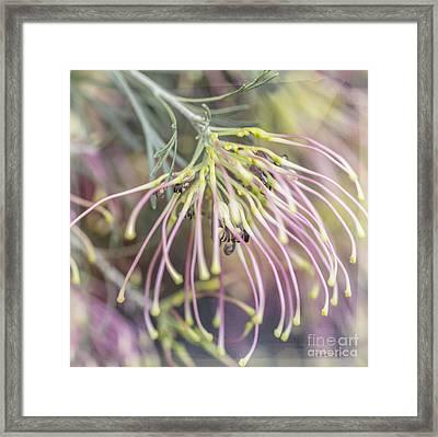 Winparra Gem Framed Print by Linda Lees