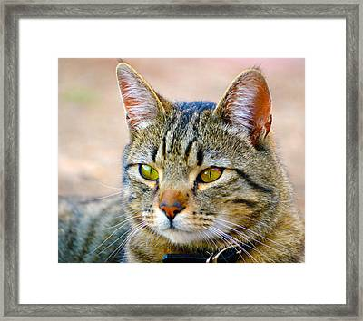 Winston 8 Framed Print