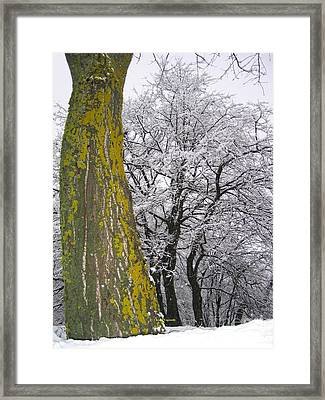 Winter  4  Framed Print by Vassilis Tagoudis