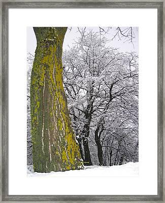 Winter  4  Framed Print by Vassilis Tagoudis