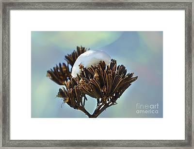 Winter Agave Bloom Framed Print