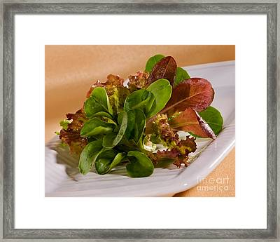 Winter And Spring Lettuce On White Plate Framed Print by Iris Richardson