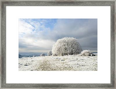 Winter Framed Print by Anne Gilbert