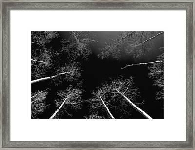 Framed Print featuring the photograph Winter Aspen  by Eric Rundle