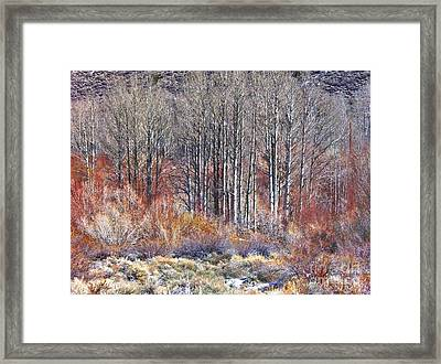 Winter Aspen Framed Print by Marilyn Diaz
