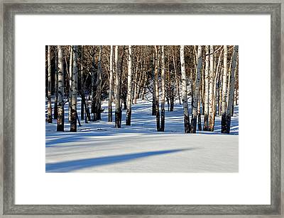 Framed Print featuring the photograph Winter Aspens by Jack Bell