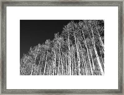Framed Print featuring the photograph Winter Aspens by Roselynne Broussard