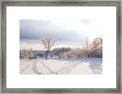 Winter At Scarborough Bluffs Framed Print by Elena Elisseeva