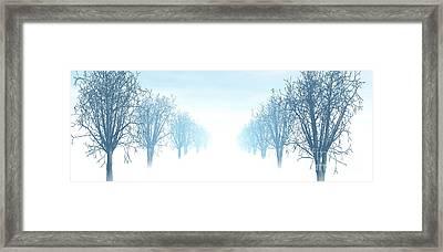 Winter Avenue Framed Print