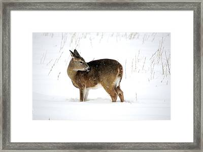 Framed Print featuring the photograph Winter Bath Time by Dacia Doroff