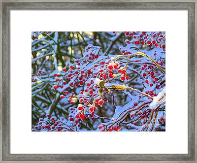 Winter Berries Framed Print by Elizabeth Dow