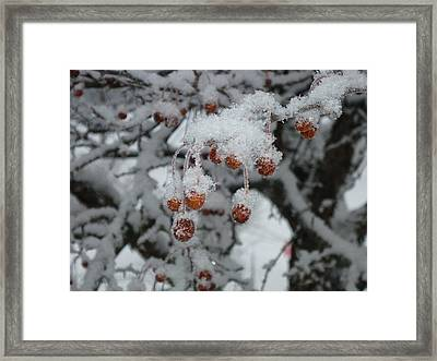 Winter Berries Framed Print by Pamela Turner