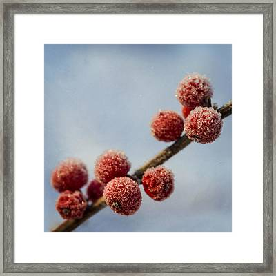 Winter Berries Framed Print by TouTouke A Y