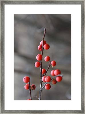 Winter Berries Framed Print by Vadim Levin
