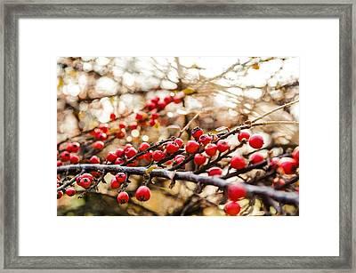 Winter Berryes. Framed Print by Slavica Koceva