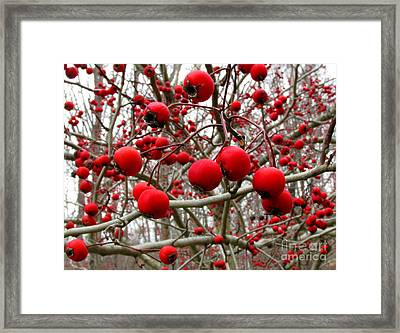 Winter Berryscape Framed Print