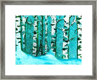 Winter Birch Framed Print