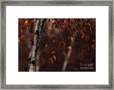 Winter Birch Framed Print by Linda Shafer