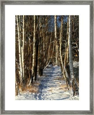Winter Birches Framed Print by Lutz Baar