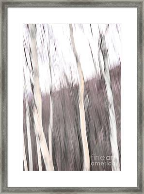 Winter Birches Tryptich 1 Framed Print
