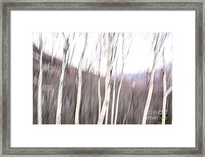 Winter Birches Tryptich 2 Framed Print