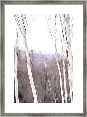 Winter Birches Tryptich 3 Framed Print