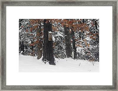 Framed Print featuring the photograph Winter Bird House by Wayne Meyer